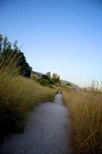 The Camino 1