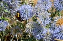 Huge Bee