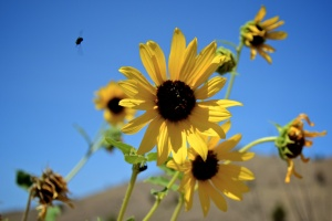 flowers-and-bugs-6