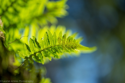 Winter Fern