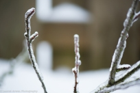 Ice Storm 2014-2