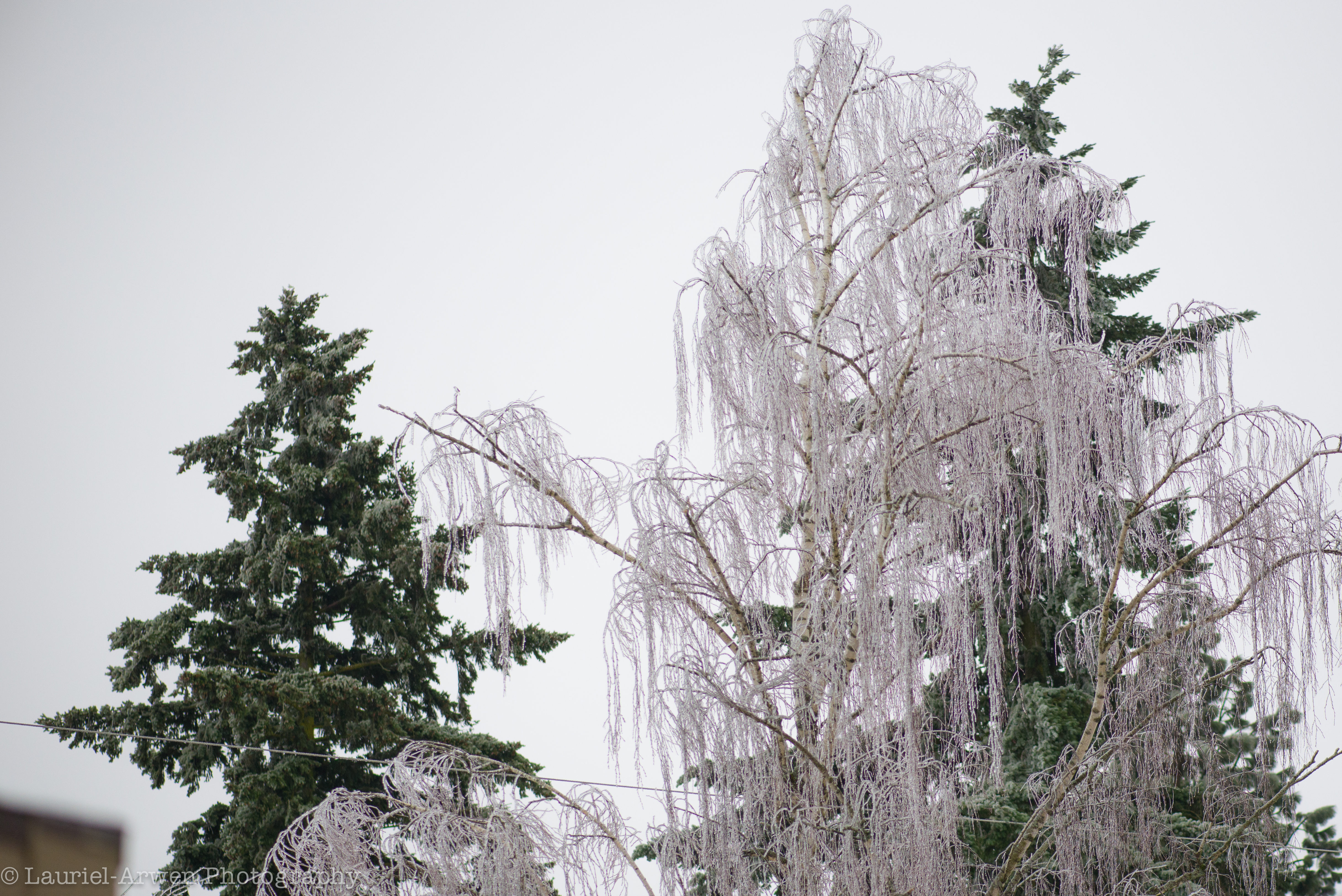 ice storm A strong closed upper low pressure system worked its way eastward, from the southern coast of california towards the boot heal of new mexico, bringing with it a punch of winter weather for the 13th through the 16th of january.