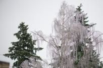 Ice Storm 2014-4