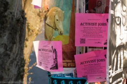 Activist Jobs